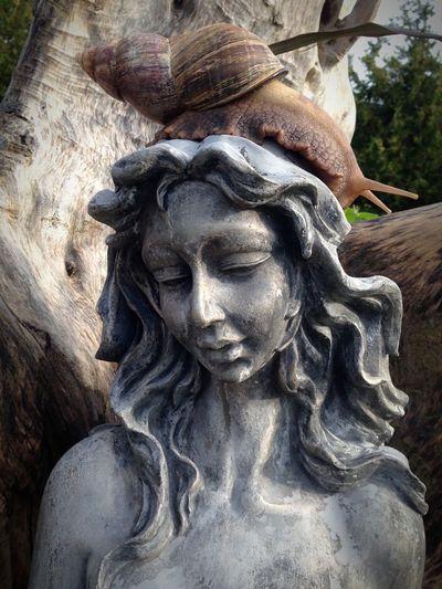 Ахатина ахатины Русалка Achatina Achatina Fulica Snail🐌 Snail Snails Snail Collection Mermaid