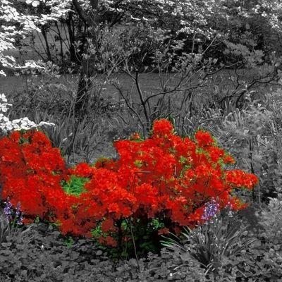 with love...good night!!! Hello World Nature_obsession Eyem Nature Lovers  Eyemcatalonia