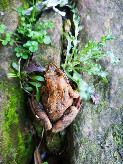 La reinette 🐸 Frog Frogs EyeEm Best Shots EyeEm Nature Lover Nature EyeEm Gallery Reinettes Prince  Leaf Close-up Animal Themes Plant Green Color