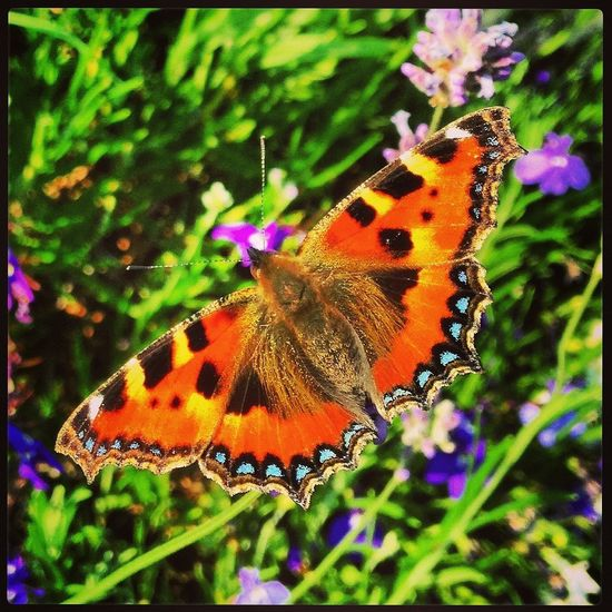 Butterfly in the Sunshine IPhone IPhoneography Macrophotography