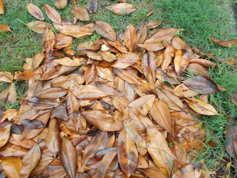 Abundance Autumn Backgrounds Brown Change Close-up Day Fallen Full Frame Grass Ground Heap Large Group Of Objects Leaf Leaves Natural Pattern Nature No People Outdoors Season