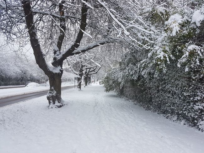 Snow Winter Cold Temperature Nature Tree Outdoors Human Body Part Day One Person People One Man Only Only Men Sky