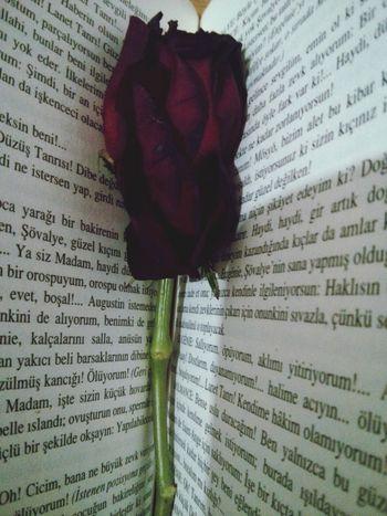 Reading Flowers Flowerporn Marquisdesade