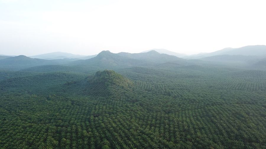 Morning! Tea Crop Tranquility No People Outdoors Mountain Range Green Color Hill Plant Day Tree
