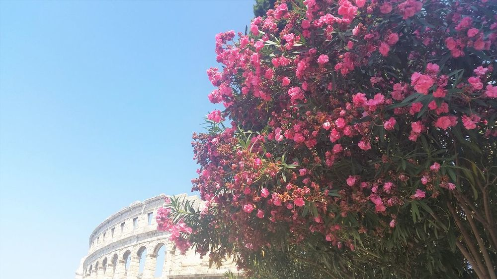 Colosseum Croatia Day Flower Nature No People Outdoors Pula Croatia Sky Your Ticket To Europe Perspectives On Nature