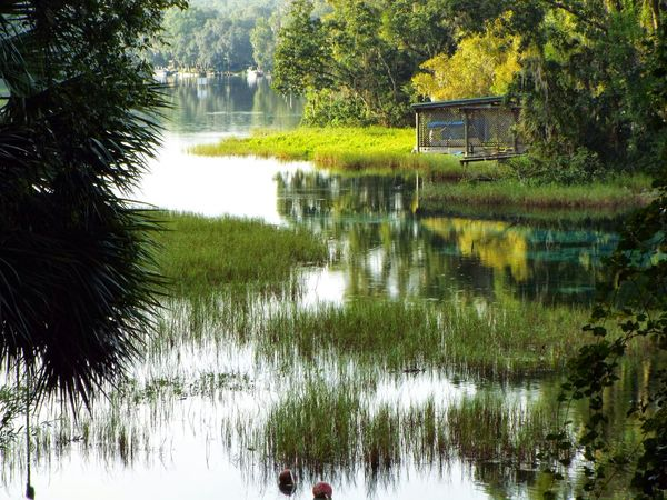 Rainbow Springs Dunnellon Florida#8 Reflection Waterfront Plant Growth Calm Tranquil Scene Nature Water Surface Tranquility Beauty In Nature Day Outdoors No People Environment Remote WoodLandGreen Color Tree Non-urban Scene Spring Scenics Tranquility Green color Calm Reflection Green