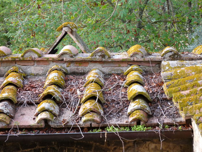 Arhitecture Photography Travel Destinations Roof Tiles Roof No People Outdoors Close-up Nature