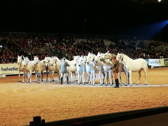 Horse Racing Men Jockey Horseback Riding Togetherness Horse Livestock