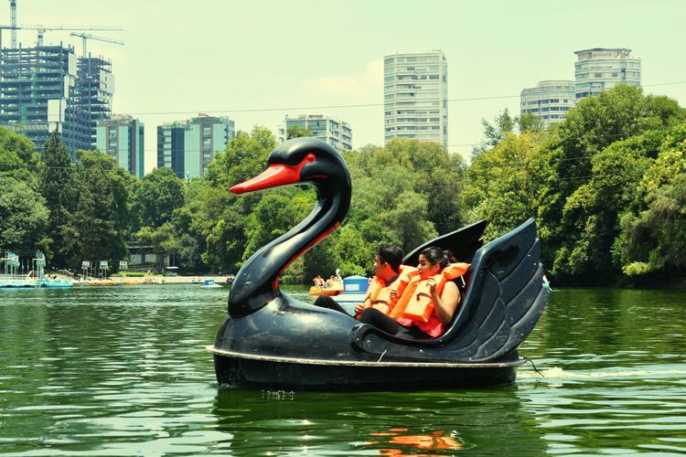 Un cisne en la ciudad... Architecture Water City Nature Sky Mexico Chapultepec Lake Cisne Black Green Cityscape Day Tree