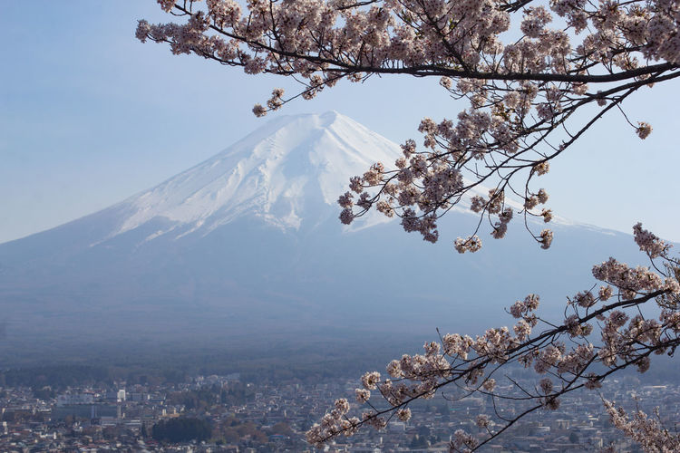 Scenic view of cherry blossom by tree mountains against sky