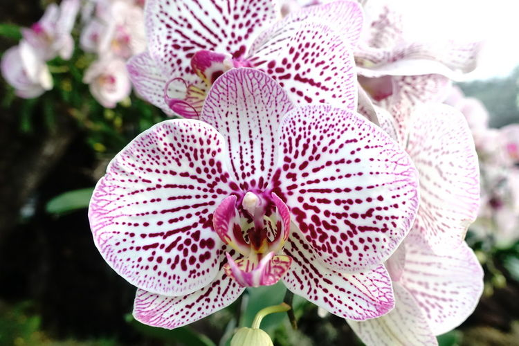 Close-up of orchid blooming outdoors
