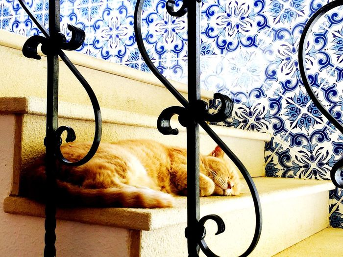 Cats Of EyeEm Animal Themes Portugal, Lagos, Siesta First Eyeem Photo Adapted To The City Adapted To The City