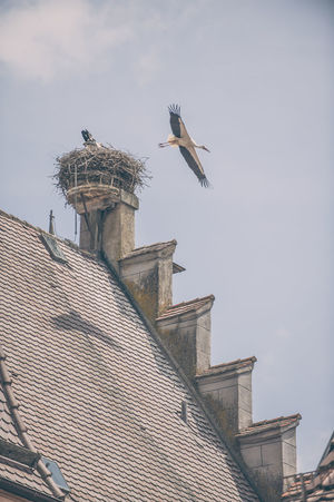 Architecture Building Exterior Built Structure City Day No People Outdoors Sky Stork's Nest