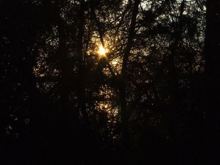 Back Lit Dark Doñana La Algaida Pinar De La Colonia Monte Algaida Pine Tree Pinewood Silhouette Sun Sunset Sunset Silhouettes WoodLand