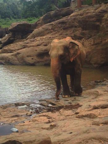 The most beautiful creature in the world🐘 Elephant Unawatuna SriLanka First Eyeem Photo