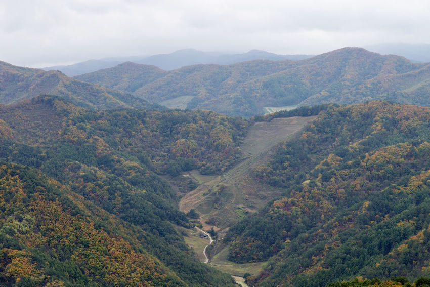 landscape of Mindeungsan Mountain in Jeongseon, Gangwondo, South Korea. Mindeungsan is famous for silver grass. Autumn Jeongseon, Korea Mindeungsan Silver Grass Beauty In Nature Day Landscape Mountain Mountain Range Nature No People Outdoors Scenics Sky Tranquil Scene Tranquility Tree