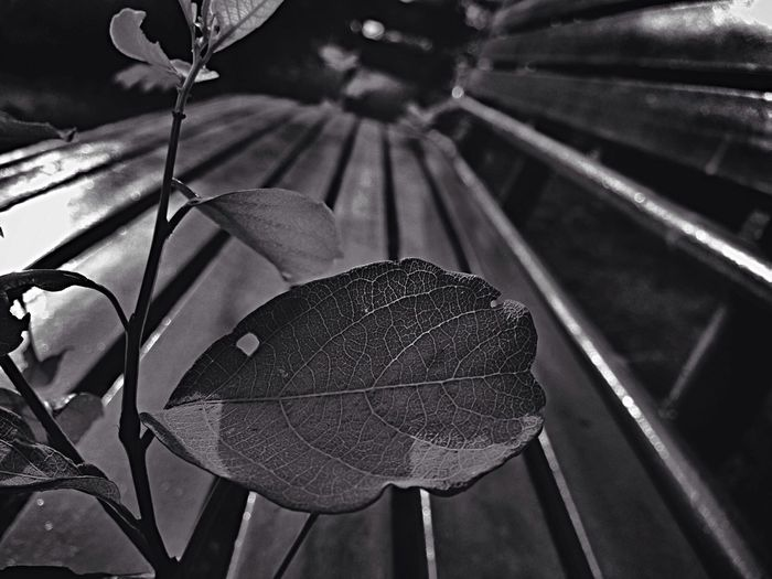 Leaf Walking Around Empty Chair Black & White