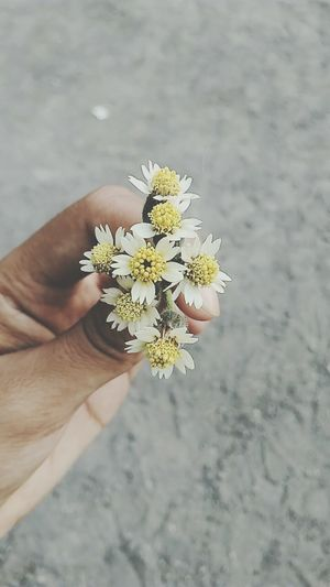 Flower 🌸 Human Body Part Human Hand Flower Close-up Outdoors Flower Head People Nature Living Organism Day One Person Adult