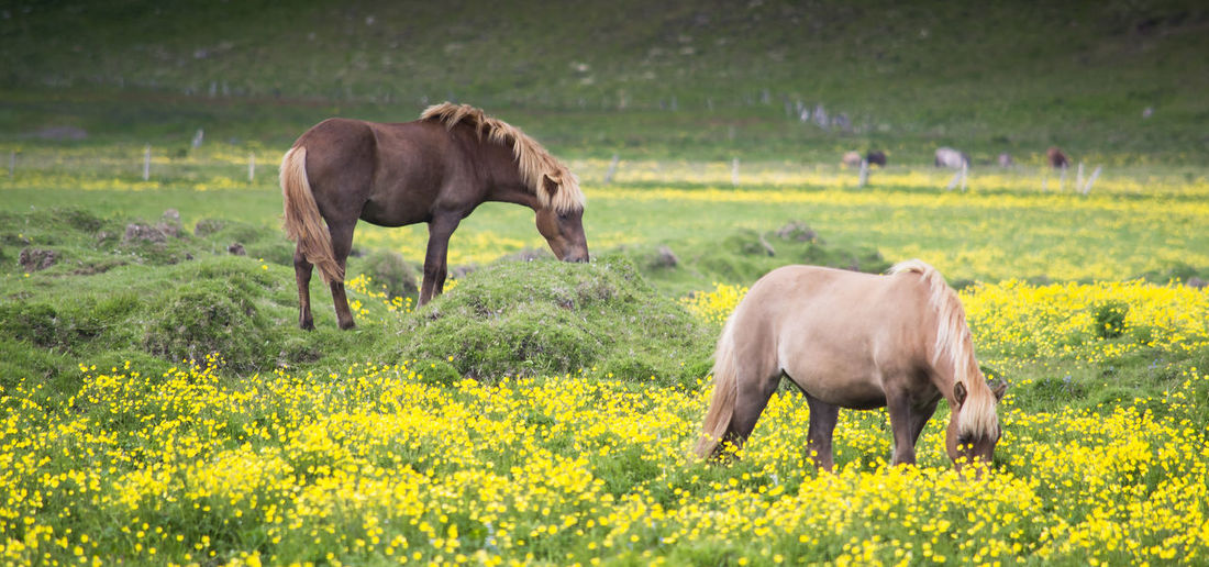 Animal Themes Day Domestic Animals Field Grass Grazing Horse Landscape Livestock Mammal Nature No People Outdoors Pasture Togetherness EyeEmNewHere