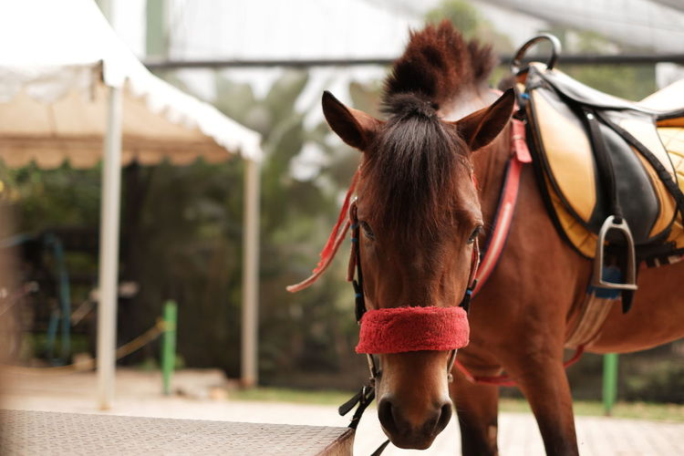 Horse in ranch