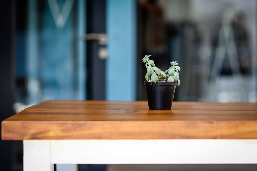 Table dressing Day Flower Pot Focus On Foreground Growth No People Plant Potted Plant Restaurant Selective Focus Table Wood - Material