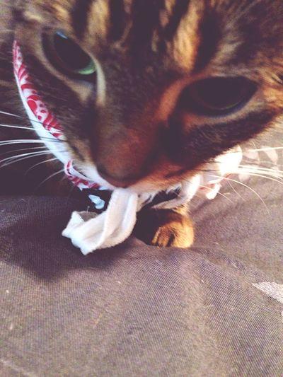 K I K I Cats Kitty Cat