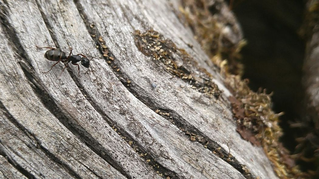 Ant Photography Ants Ants Life Antsworld Insects  Insect Photography Insect Collection Bugsofeyeem Bugs