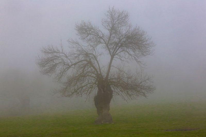 Encina Encina Fog Holm Oak Niebla PEDRO RAMOS PERATO Tree árbol
