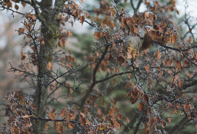 Squirrel Plant Tree Growth Dry Day No People Nature Focus On Foreground Beauty In Nature Close-up Branch Tranquility Leaf Autumn Plant Part Outdoors Selective Focus Land Vulnerability  Fragility Dead Plant Change Wilted Plant Dried