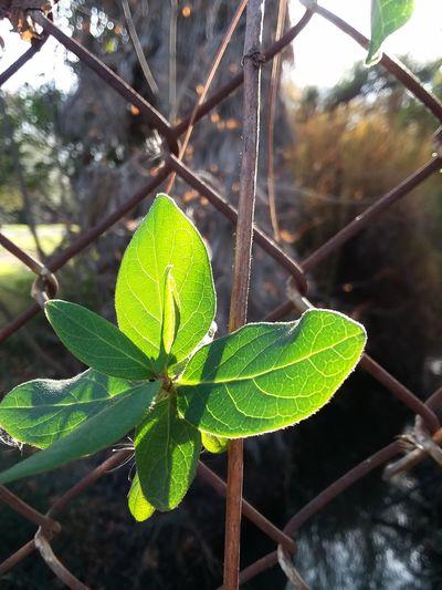 Macro Sunlight Sunshine Beautiful Plant Life Nature Leaf Plant Close-up Beauty In Nature