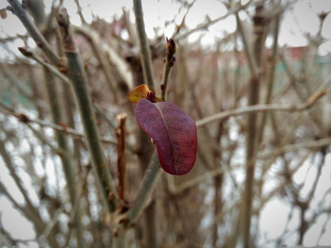 Nature Close-up Winter Purple Plant Growth Tree No People Beauty In Nature Fragility Cold Temperature Flower Outdoors Day Flower Head