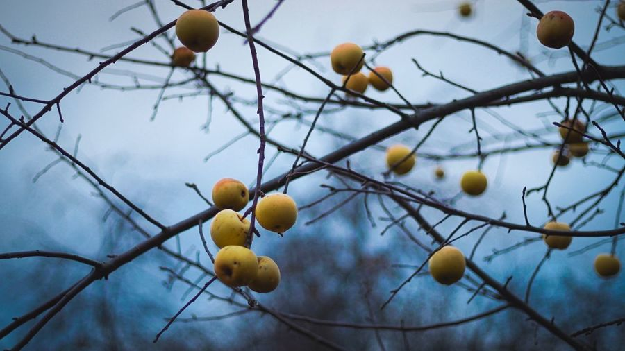 Plant Fruit