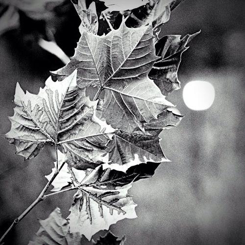 🍃....... Leaf