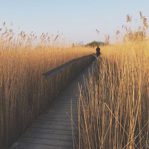 Woman walking on narrow pathway along long grass
