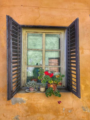 Windows Medieval Town Doorsandwindows Street Photography Picture Window Eastern Europe Glass Reflection Window Architecture Built Structure Plant Building Exterior Flower No People Flowering Plant Wall - Building Feature House Day Outdoors Residential District Glass - Material Potted Plant Growth
