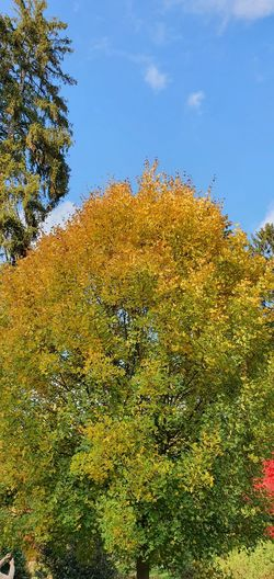 Low angle view of autumnal trees against sky