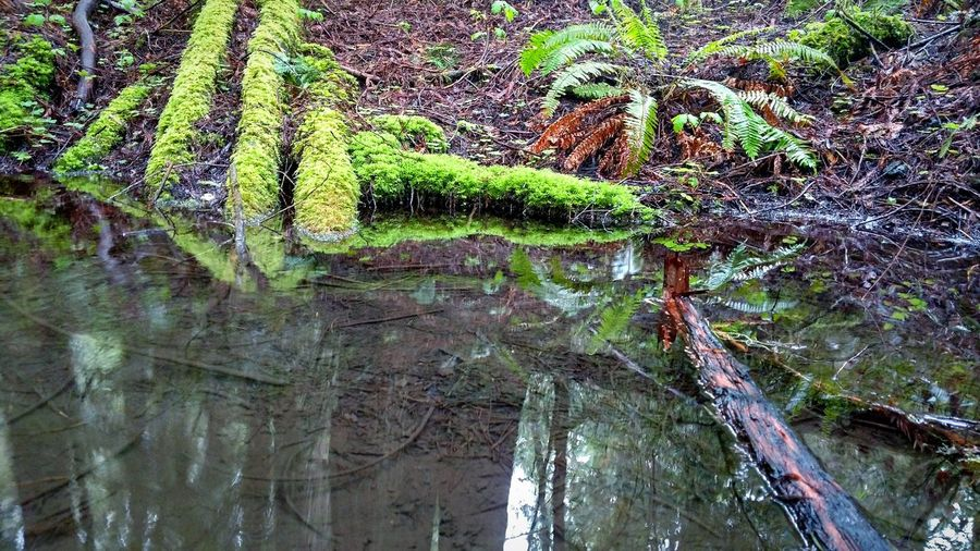 Reflection Reflection_collection Reflections In The Water EyeEm Best Shots EyeEm Nature Lover Lobuephotos Humboldt County Redwoods Moss Lush Nature_collection Nature Photography Smartphonephotography Motodroid Motoz Phone Backgrounds Full Frame No People Day Green Color Water Outdoors Beauty In Nature Nature