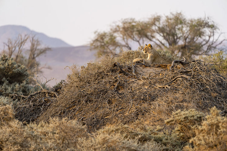 View of an animal sitting on land