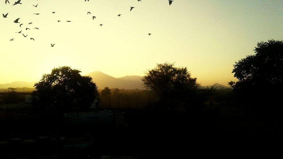 Bird Flying Nature Sunset Tree first eyeem photo Be. Ready. EyeEmNewHere