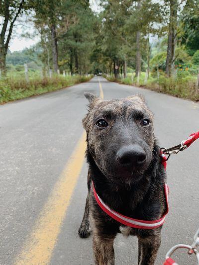 One Animal Mammal Animal Themes Animal Domestic Animals Domestic Pets Vertebrate Transportation Canine Leash Dog Day Tree Pet Leash Plant Pet Collar Road Looking At Camera Collar