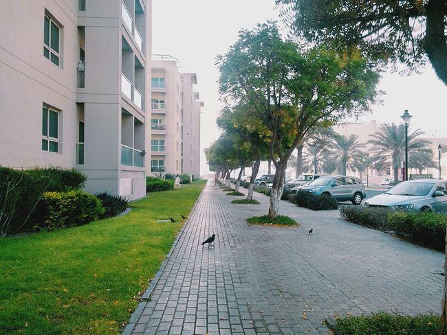 Early Morning Jogging Perspective Fotor Eye4photography  EyeEm Nature Lover Dubai Taking Photos Earth