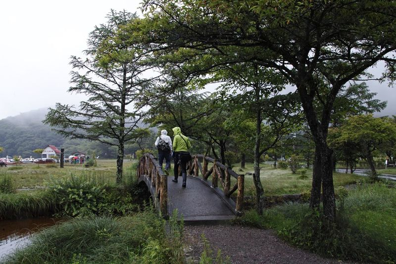 Rear view of people walking on footpath by trees