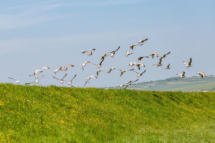 Birds flying over grassy field