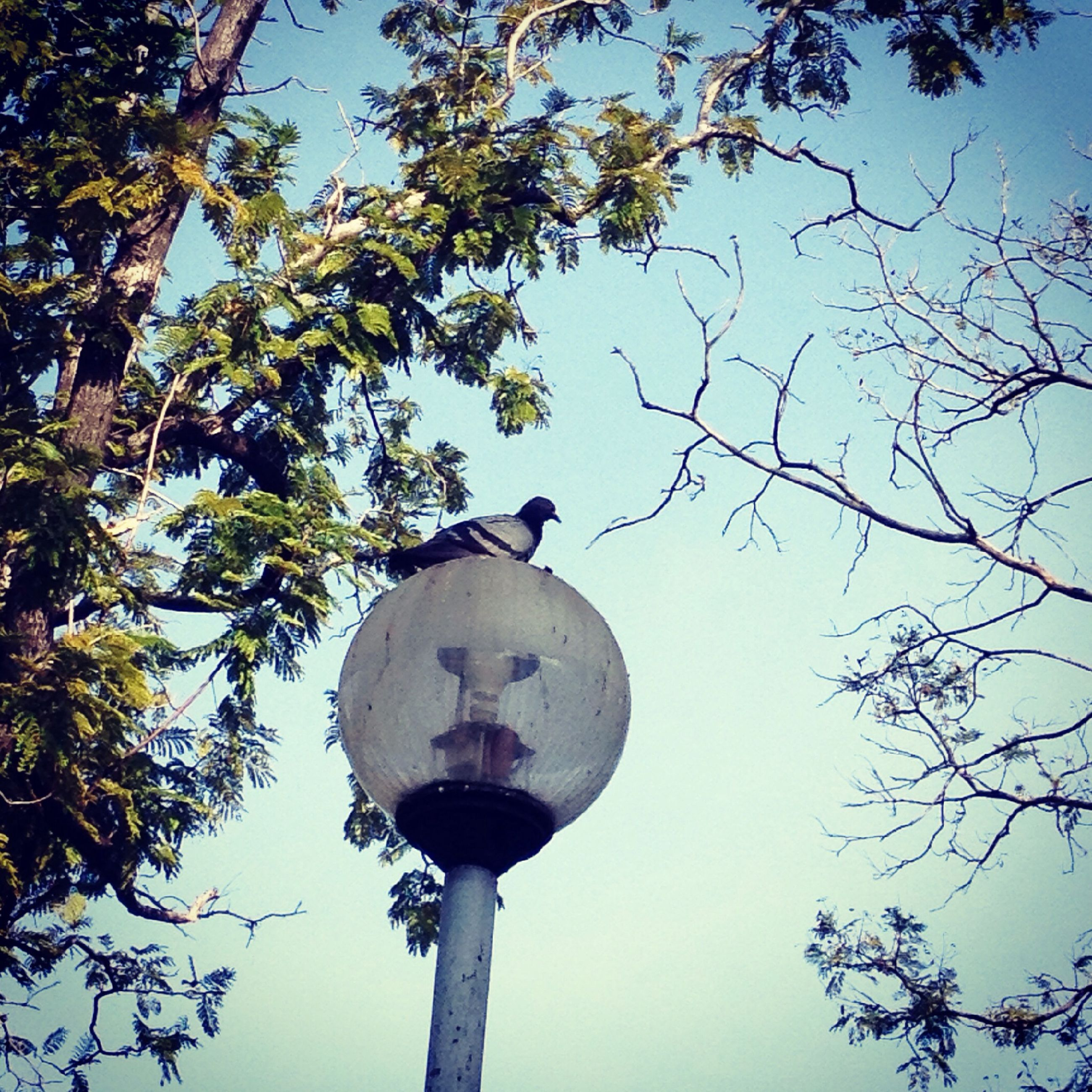 low angle view, tree, street light, branch, sky, lighting equipment, communications tower, clear sky, tower, communication, built structure, bird, architecture, tall - high, high section, day, sphere, lamp post, outdoors, no people