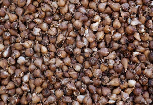 Abundance Backgrounds Brown Flower Bulbs Full Frame Heap Large Group Of Objects Market Tulip Bulbs