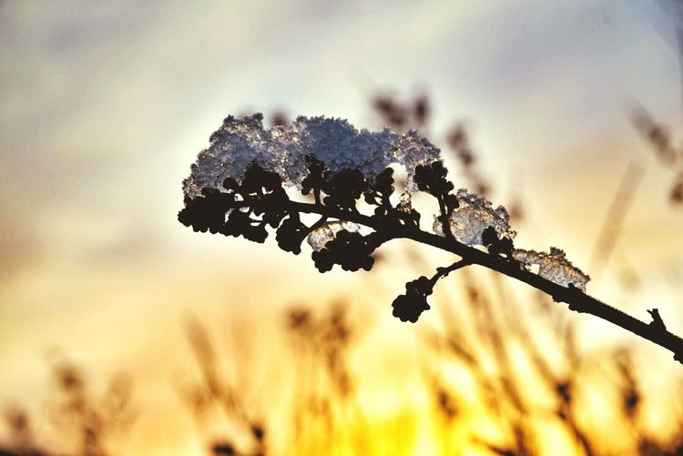 Frosty Morning Frosted Floweer DECEMBER2015 December Morning December Sunny Morning Hanging Out Taking Photos Decemberphotoaday