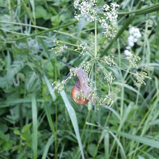 Schnecke Snail Schnecke Nature Natur meadow wiese fauna animals tier