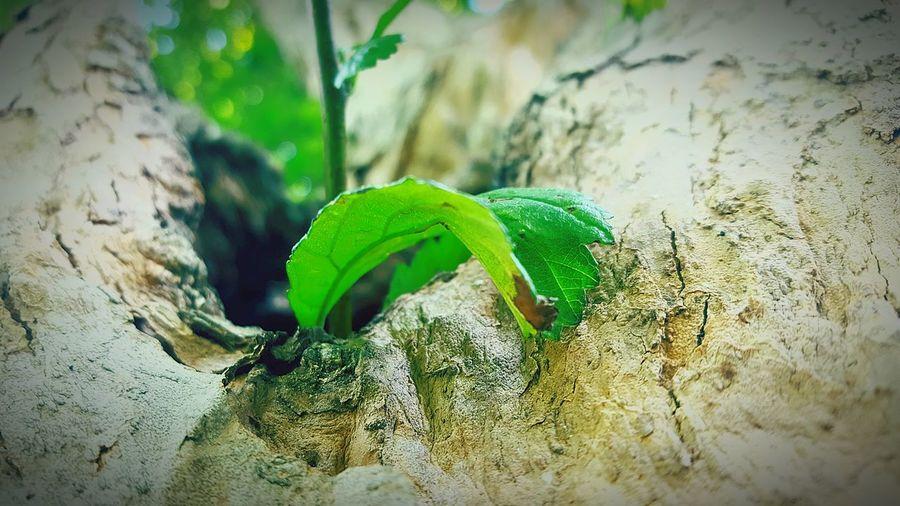 Leaf going