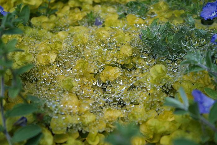 Flowers Spider Web Dew NX2000