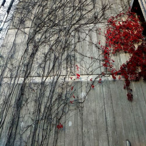 Branches On Wall No People Red Nature Day Architecture Outdoors Close-up Branches Red
